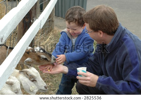 Father & son feeding goats - stock photo