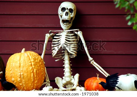 faux skeleton sitting in a halloween themed arrangement of pumpkins and blackbirds - stock photo