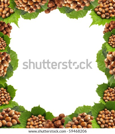 Favourite wood nuts - stock photo