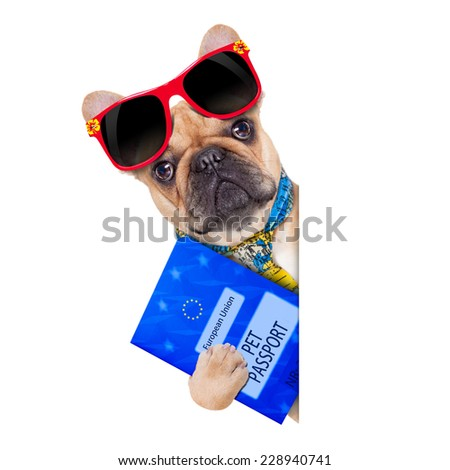 fawn bulldog with pet passport immigrating or ready for a vacation , besides a white placard or banner, isolated on white background - stock photo