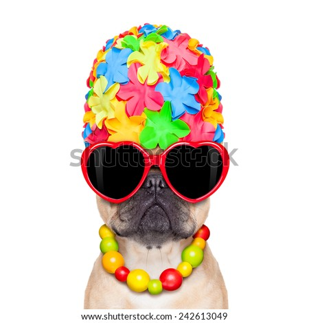 fawn french bulldog dog ready for summer vacation or holidays, wearing sunglasses, isolated on white background
