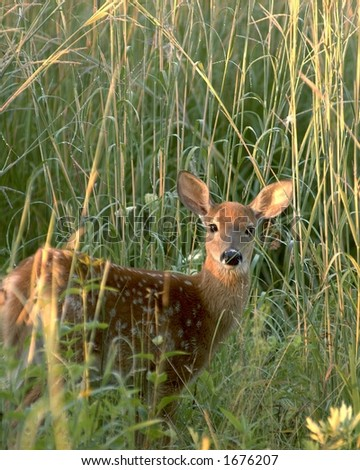 Fawn in the field. - stock photo