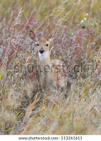 Fawn in the Grass - stock photo