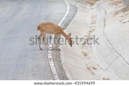 Fawn on the road.