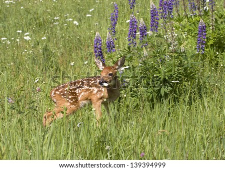 Fawn Posing in Flowers - stock photo