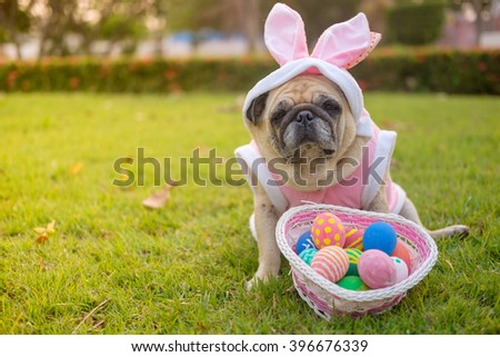 Fawn pug dog wearing rabbit costume with colorful easter eggs on grass(With color filter.).