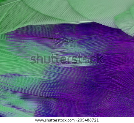 Feather budgerigars bird.  on a  background - stock photo