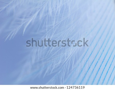 Feather close up - stock photo