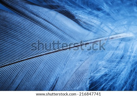 feather close up - macro detail - stock photo