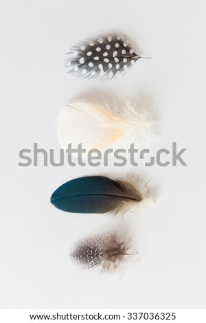 Feather Collection Detail closeups