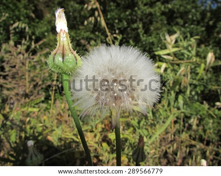 feather flower  - stock photo