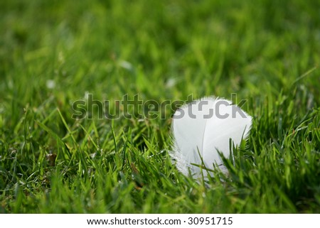 Feather in the grass - stock photo
