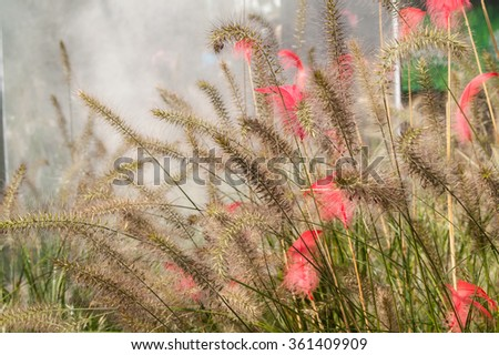 Feather in the green grass in the fog day - stock photo