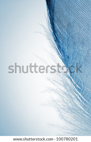 feather into the dark close up - stock photo