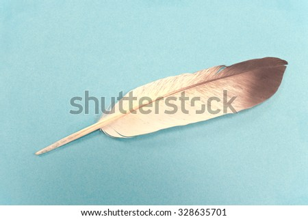 Feather isolated  on blue background - stock photo