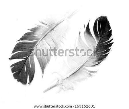 Feather isolated on the white background