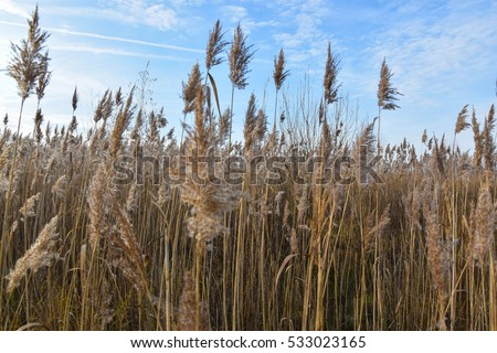 Long grass stock images royalty free images vectors for Like long grasses