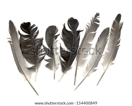 feather of a bird - stock photo