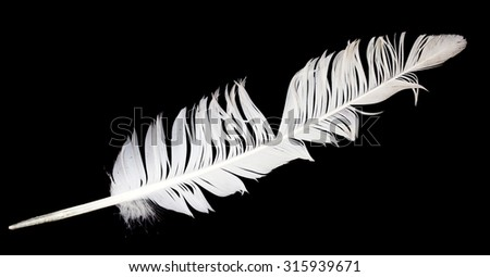 feather of a bird on a black background