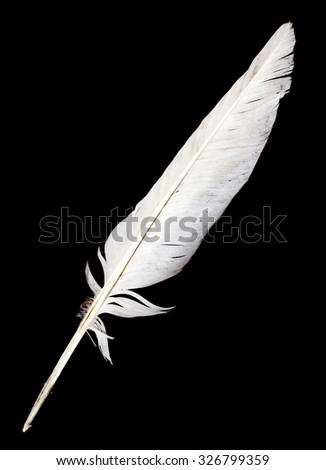 feather of a bird on a black background - stock photo