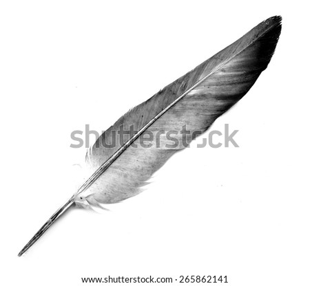 feather of a bird on a white background - stock photo