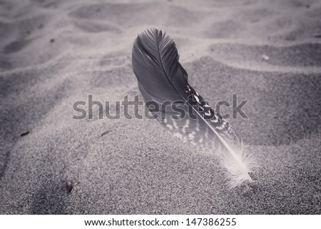 Feather of a bird on the sand - stock photo