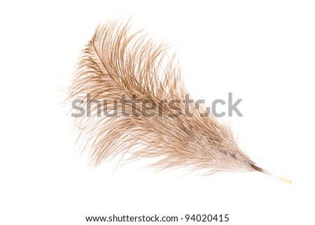 Feather of an ostrich - stock photo