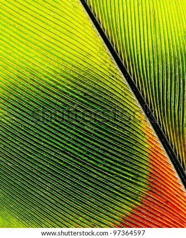 feather of macaw close up - stock photo