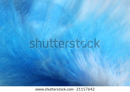 feather of the blue bird - stock photo