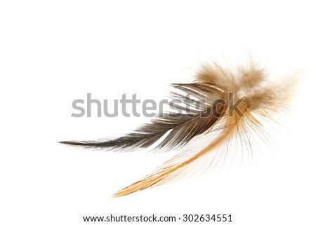 feather on a white background.for design.