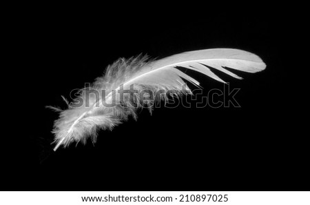 feather on black background - stock photo