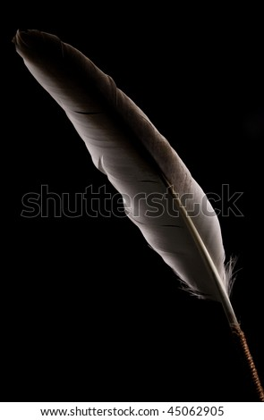 feather on black background - stock photo