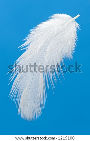 feather on blue background - stock photo