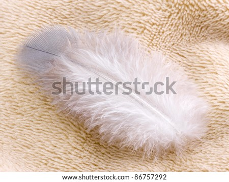 Feather on fabric - stock photo