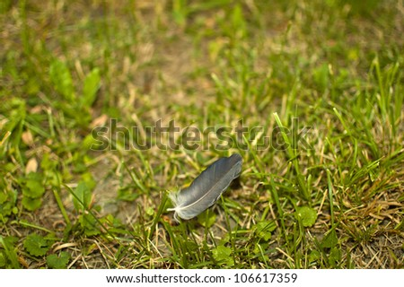 Feather on grass - stock photo