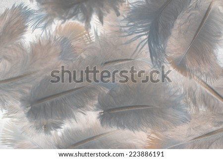 feather on gray background - stock photo