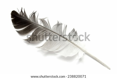 feather on white background - stock photo