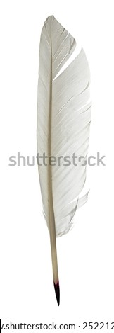 Feather pen isolated on white background - stock photo