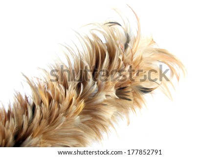 Feather soft duster isolated on white background.