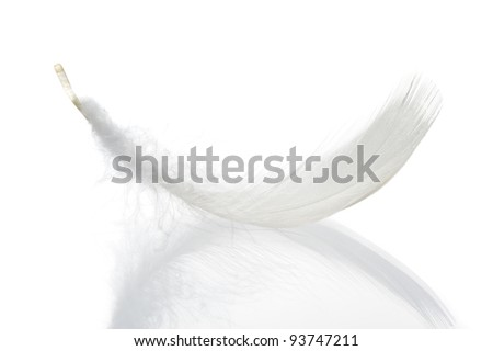 Feather. The bird's feather lies on a white background with reflexion - stock photo