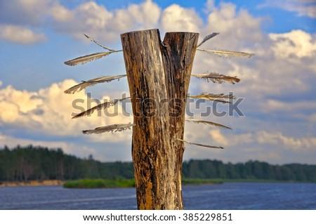 feathered tree on the beach, Baltic Sea - stock photo