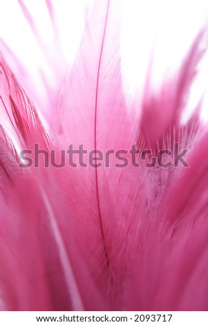 Feathers, close-up