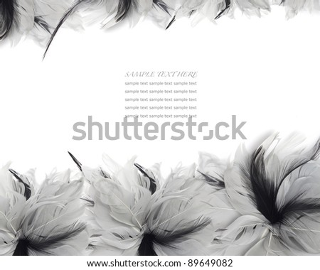 feathers frame with copyspace - stock photo