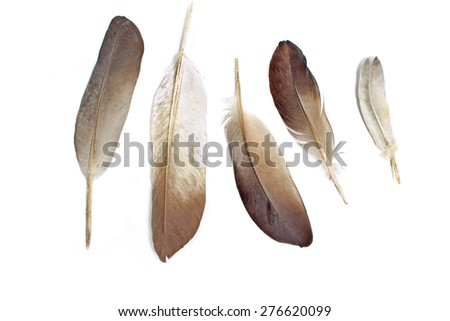 Feathers isolated on white - stock photo