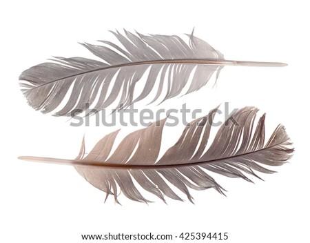 feathers isolated on white background - stock photo