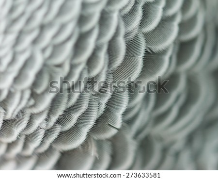 feathers of a bird - stock photo