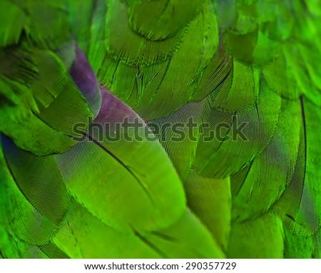 feathers of some bird - parrot parakeet - stock photo