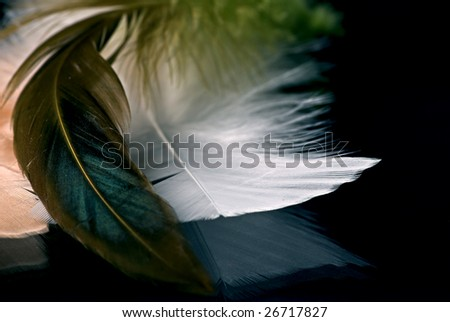 feathers on a mirror - stock photo