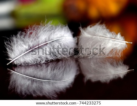 Feathers on the table