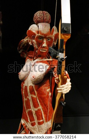 February 17 2015 Berlin Fully Plastinated Stock Photo 377058214